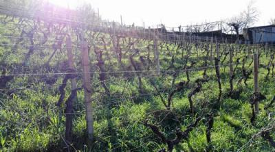 Trieste città di feste o di vino?
