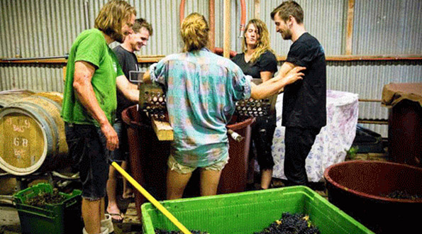 Commune of buttons vini australia