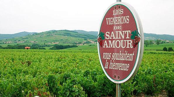 Saint Amour Beaujolais vino