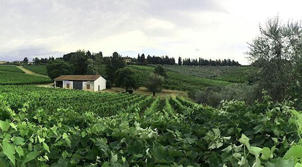Lucca Biodinamica vini