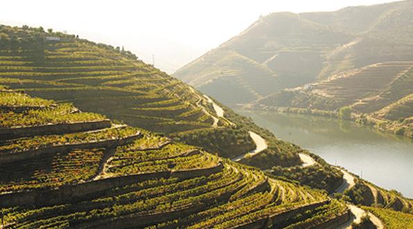 Douro Valle Portogallo Oporto