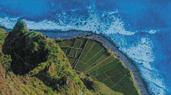 vigne a strapiombo sul mare