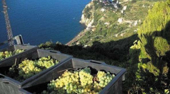 Agricoltura eroica Liguria