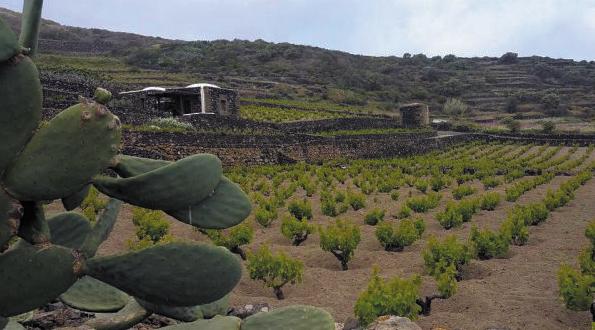 vigneti pantelleria sicilia
