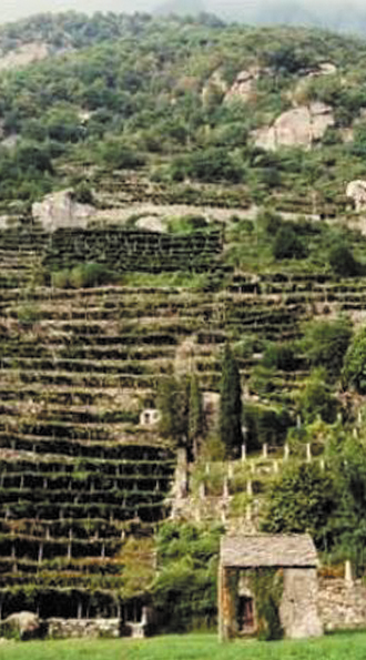 Agricoltura eroica Piemonte