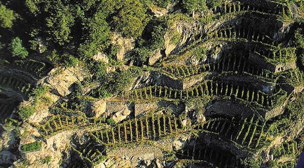 Valtellina agricoltura eroica