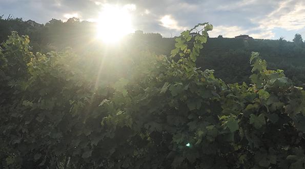 https://www.gallienoteca.it/enoteca-online/tipologia-vino/barolo.html