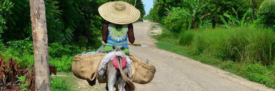 Rum online acquista rum da Haiti