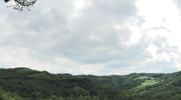 Il bosco a Modigliana