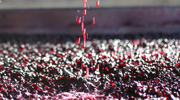 la vinificazione in rosato