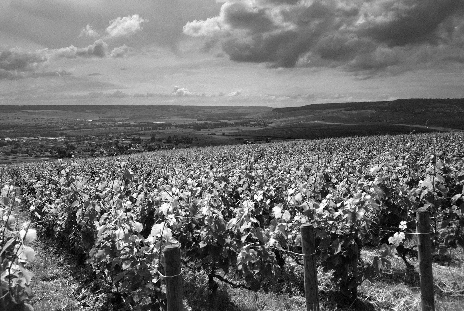 Jacquesson vigne