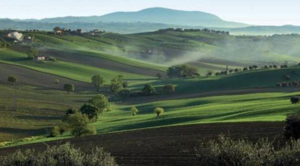 Verdicchio colline Marchigiane