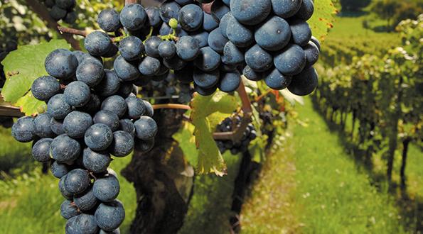 lotta integrata agricoltura sostenibile vino naturale