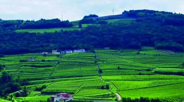 paesaggio azienda agricola Eredi Cobelli vini Trentino