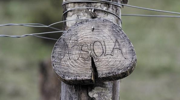 nosiola vitigno