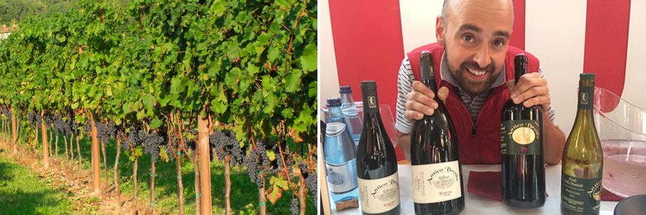 vigna e produttore vino Antico Broilo