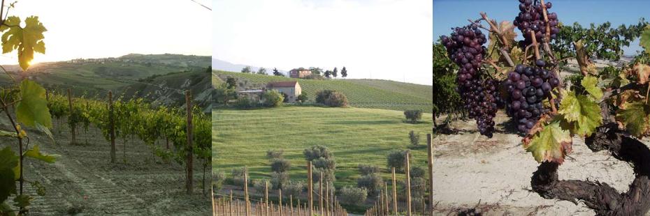 Poderi San Lazzaro