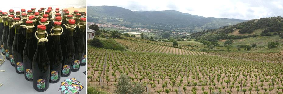vigne cantine sannas